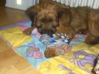 Teddy6klein